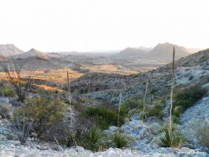 Terlingua TX Motels