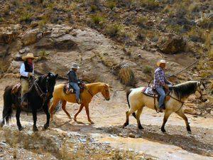 Big Bend Horseback Riding